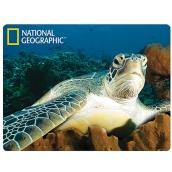 Prime3D postcard - Water turtle 16 x 12 cm