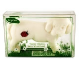 Kappus Dog toilet soap in an attractive, transparent box of 50 g