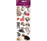 Room Decor Stickers of cat, cat and big cloth 34.5 x 12.5 cm