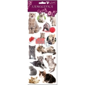 Room Decor Cat stickers, cat and large ball 34,5 x 12,5 cm