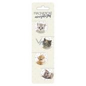 Albi Magnetic Mini Tabs Kittens diameter 3 cm 4 pieces