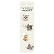Magnetic mini-books - Kittens