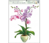 Room Decor Window film without glue orchids light pink 42 x 30 cm