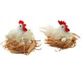 White shaggy hen in a 12 cm nest