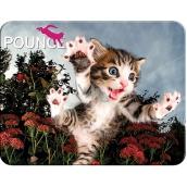 3D Postcard- Kitten 16 x 12 cm