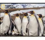 Prime3D magnet - Penguins 9 x 7 cm