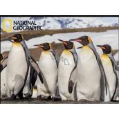 3D magnet - Penguins 9 x 7 cm