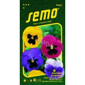 Semo Pansy garden mixture with swiss eye 0.3 g
