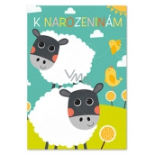 Ditipo Playing Birthday Card Dagmar Patrasová Sheep Belt 224 x 157 mm