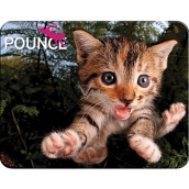Prime3D magnet - Kitten 9 x 7 cm